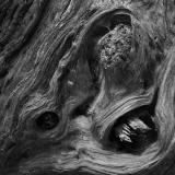 Forest Wraith