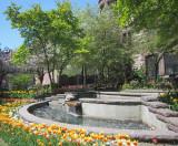 Albany Tulips