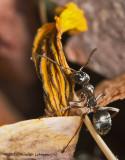 K5D1652-Ant.jpg