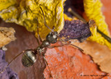 K5D1669-Ant.jpg