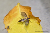 K5D8162-Unidentified insects.jpg