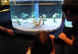Disney Aquarium