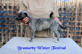 Brantarby Winter Festival