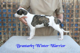 Brantarby Winter Warrior