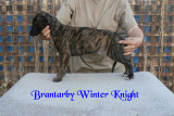 Brantarby Winter Knight