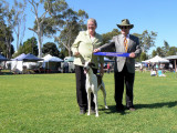 Sighthound Assoc 14 pt BOB April 2012