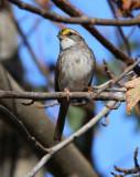 nc_birds_1111
