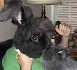 Rabbit wanna-be