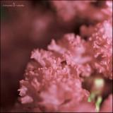 July 2012 ~ Melodic Memories