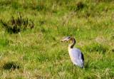 Birds In Uruguay