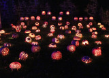 The Great Jack O'Lantern Blaze - Carvings