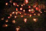 The Great Jack O'Lantern Blaze - Mushrooms