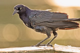 Ugly Bird
