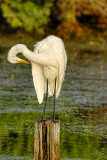 egret cleaning