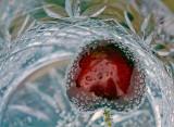 Cherry Tonic
