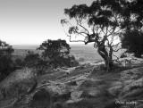 Barrossa Valley Sundown