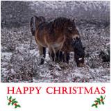 ChristmasCard2011.jpg