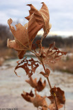 January, 7th, 2011 - Old Leaves - 1428.jpg