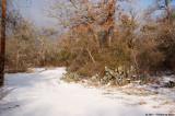 February 4th 2011 - Snowy Texas - 1619.jpg
