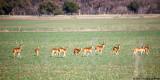 March 2nd, 2011 - Deer Train - 1722.jpg