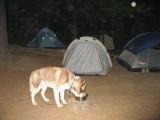 Dog and lotsa tents