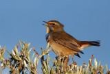 Birds of Portugal & Spain