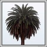 A Palm In FogA More Impressionistic ViewIn My Case, More Realistic