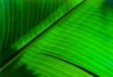 Leaf Me Alone by Paul Wear