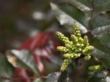 Springtime green - Miro