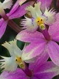 Two Frightful Flower Heads - Brad