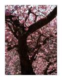 Announcing spring - Colin