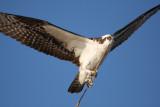 Birds / Pajaros