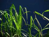 dragonfly marsh