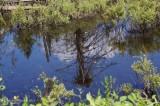 Reflet du nid de Balbuzard - Osprey nest reflection