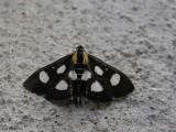 3 Perles Papillon Argenté clair Ailes Gravé 47mm