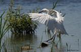 Oiseaux rares Birds