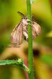 Little Moth Holding on Tight