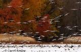 Snows in Autumn