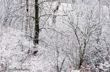 Snow Tangle