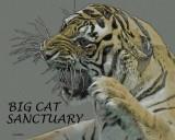 BIG CAT SANCTUARY