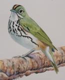 Ovenbird