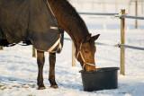 Winter 2012 bij EquiLuck