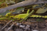 Groene bladtak vrouw