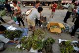 Uit Birma en Laos geroofde planten 5 euro per kilo (candid picture)