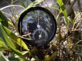 Bulbophyllum minutius, temp. at 13.00 hours, 1600 mtr.