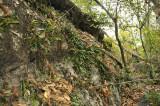 Orchid rock, east side (Bulbophyllum macrocoleum)