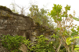 Orchid rock, north-east side