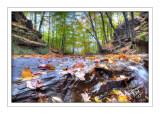 Rocks & Leaves