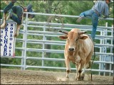 Rodeo - BCRA Pritchard  2012
