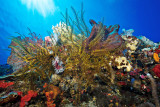 Molana East wall coral reef
